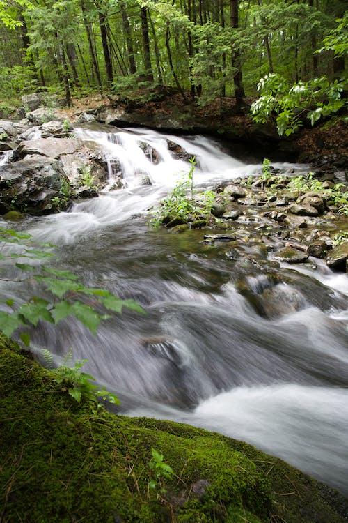 Immagine gratuita di acqua, alberi, foresta, muschio