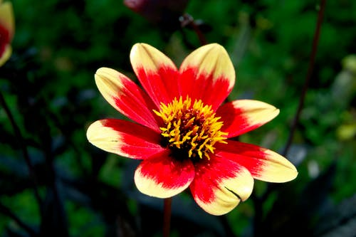 Yellow and Red Flower