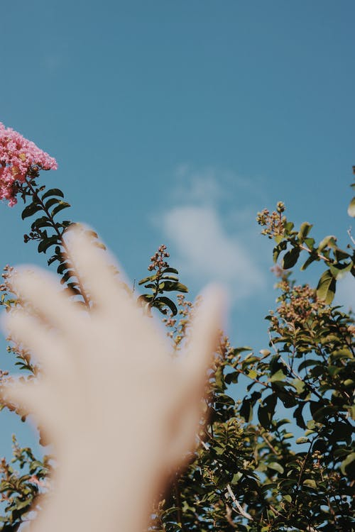 Person Holding Pink Flower Under Blue Sky