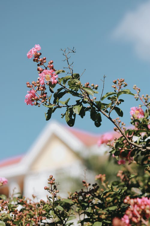 Pink Flower on Tree Branch