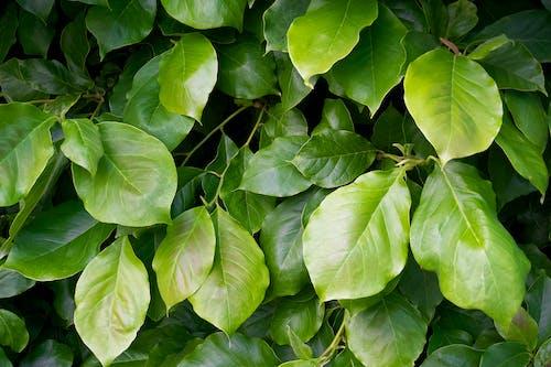 フード, ブッシュ, ぶどうの木の無料の写真素材