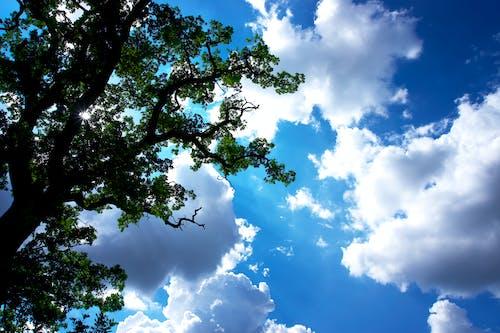 壁紙, 木, 空の無料の写真素材
