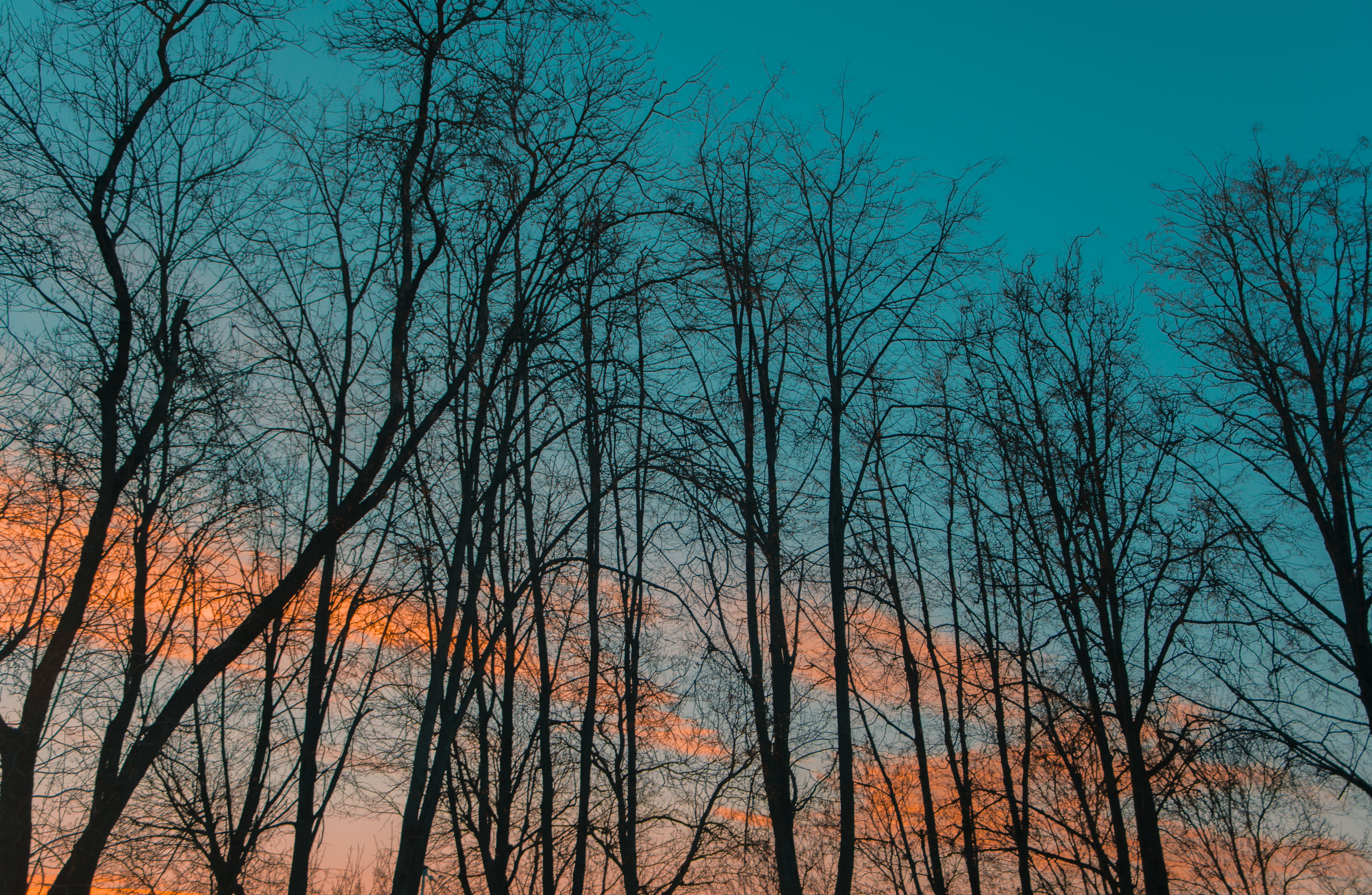 Photography of Leafless Trees during Golden Hour