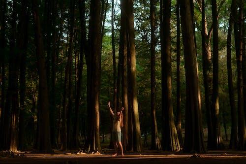 Ingyenes stockfotó áll, álló, erdő témában