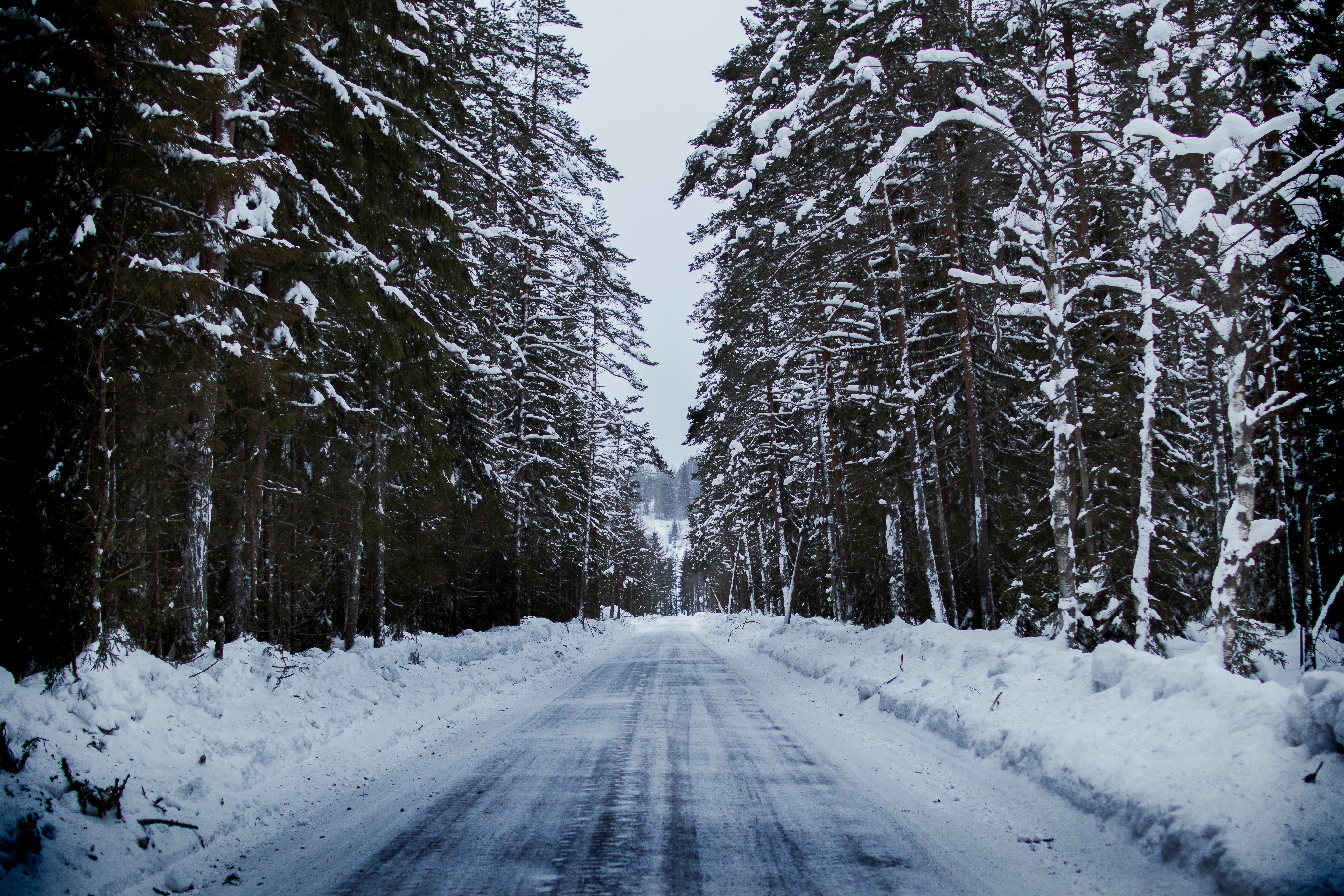 cesta, chladný, deň
