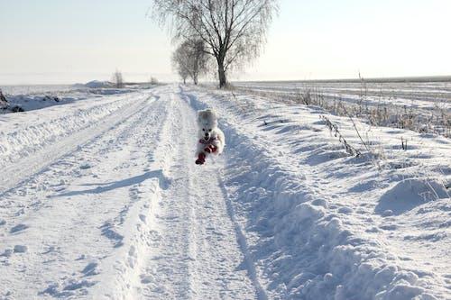 Безкоштовне стокове фото на тему «lumi, pelto, pohjanmaa, suomi»