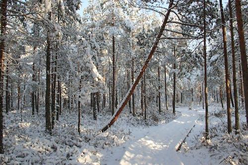Бесплатное стоковое фото с белый, ветви, деревья, дневное время