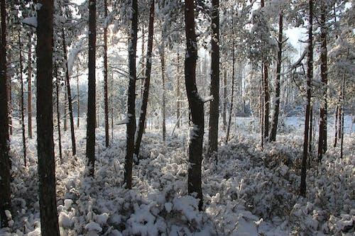 Gratis arkivbilde med årstid, dagtid, forkjølelse, frosset