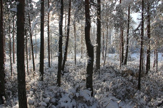 Photo of Forest Covered of Snow