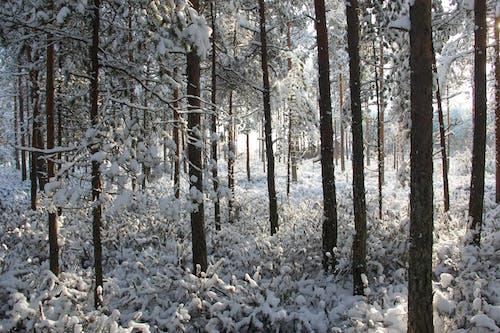 lumi, maisema, pelto, pohjanmaa 的 免费素材照片