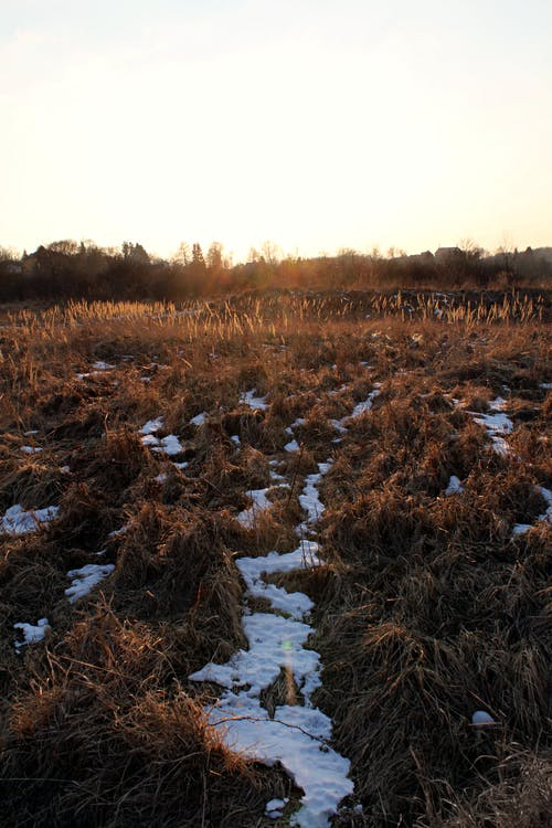 Free stock photo of cold, golden hour, grass, ice
