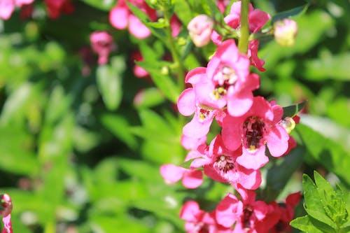 Gratis lagerfoto af smukke blomster