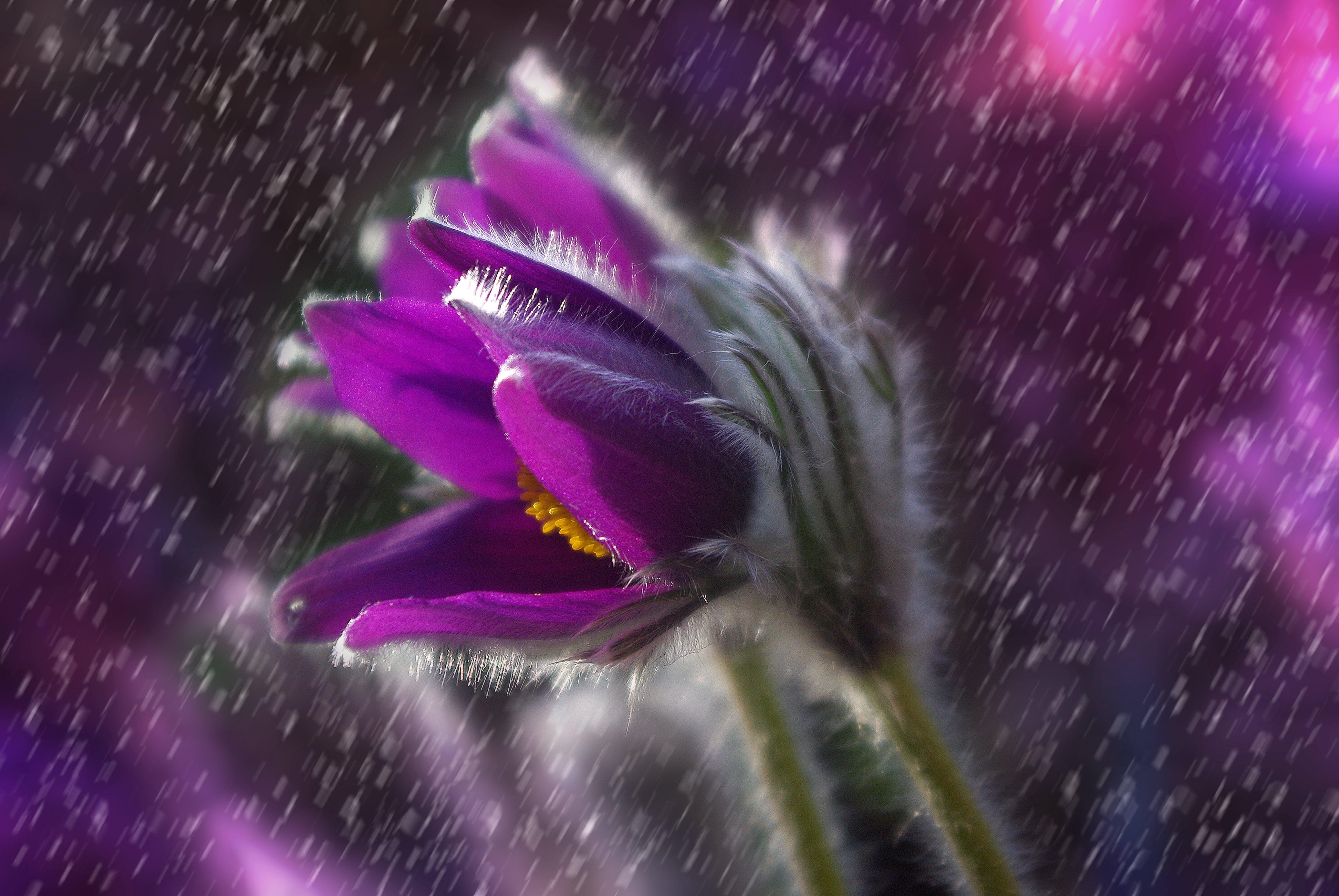 bocciolo, fiore, flora