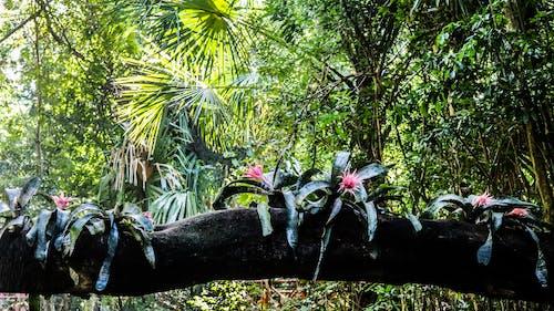 Immagine gratuita di all'aperto, ambiente, fiori, foresta