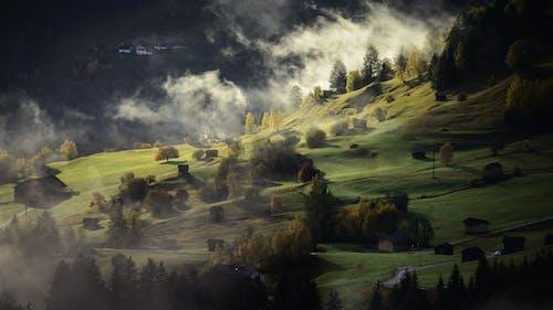 Ingyenes stockfotó fák, köd, tájkép, természet témában