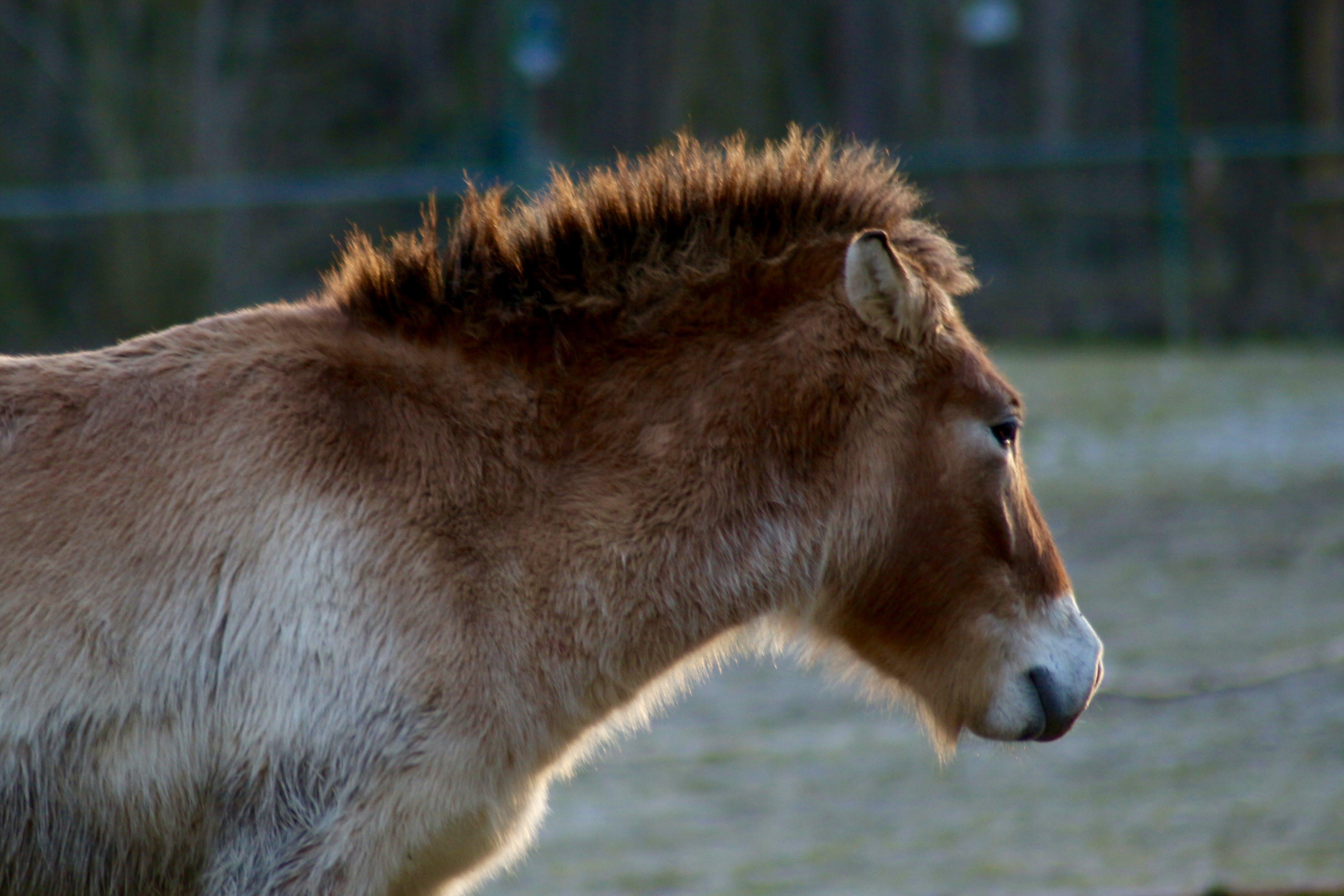Free stock photo of animal park, animal photography, bronco, horse