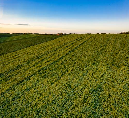 Imagine de stoc gratuită din agricultură, câmp, creștere
