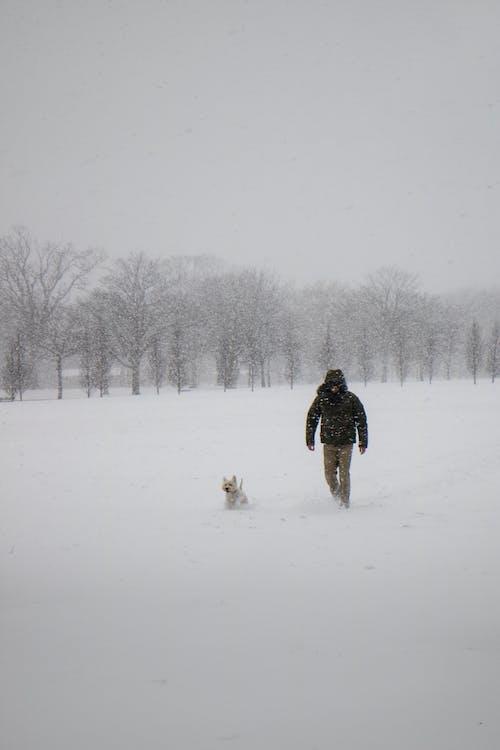 Darmowe zdjęcie z galerii z chodzenie, drzewa, krajobraz, lód