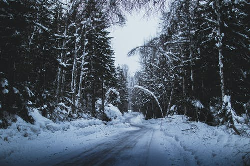 Kostenloses Stock Foto zu baum, eisig, frost, gefroren