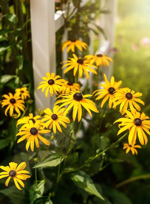 フラワーズ, 夏の花, 黄色の無料の写真素材