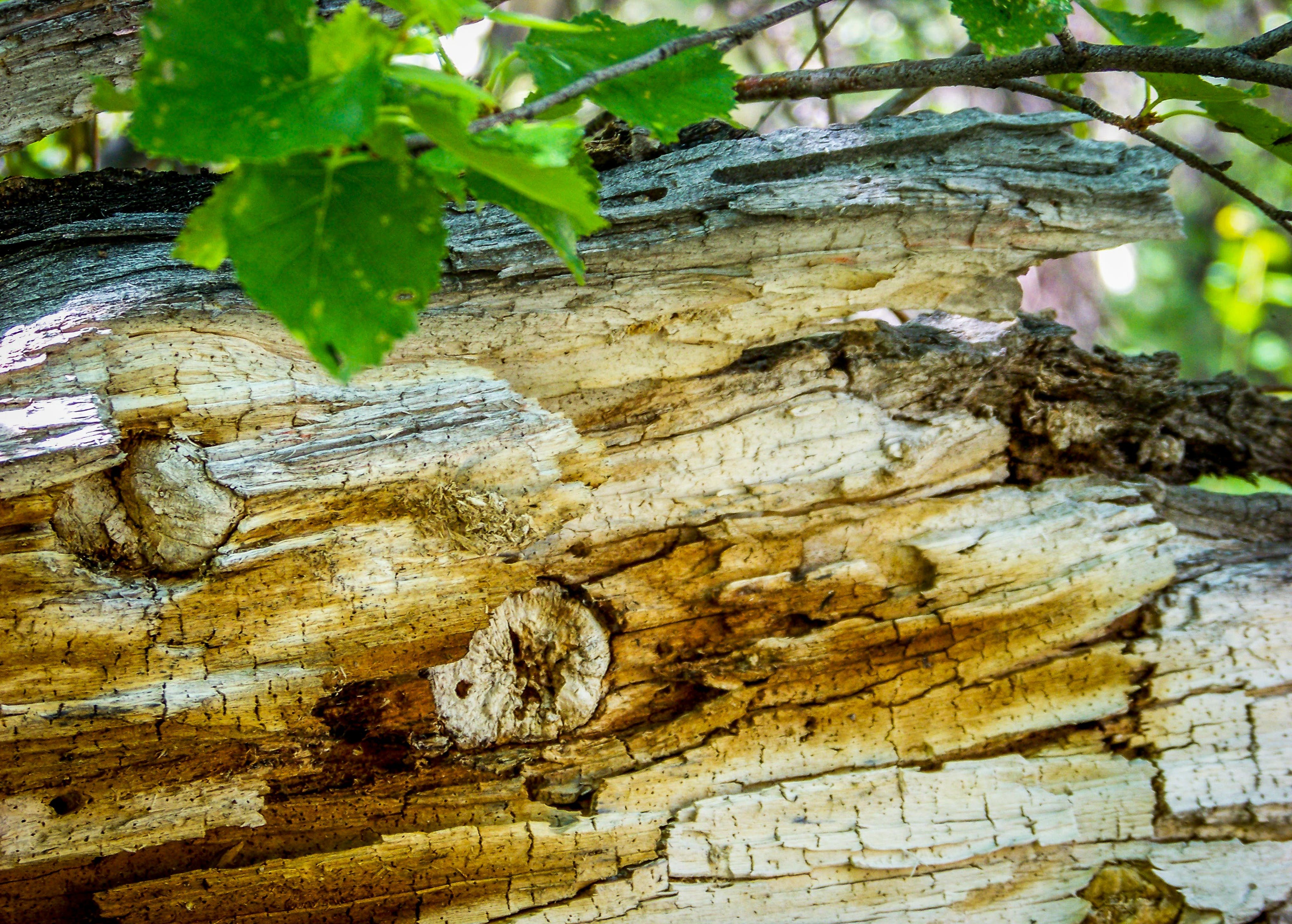 Free stock photo of fallen tree, nature, summer, tree branches
