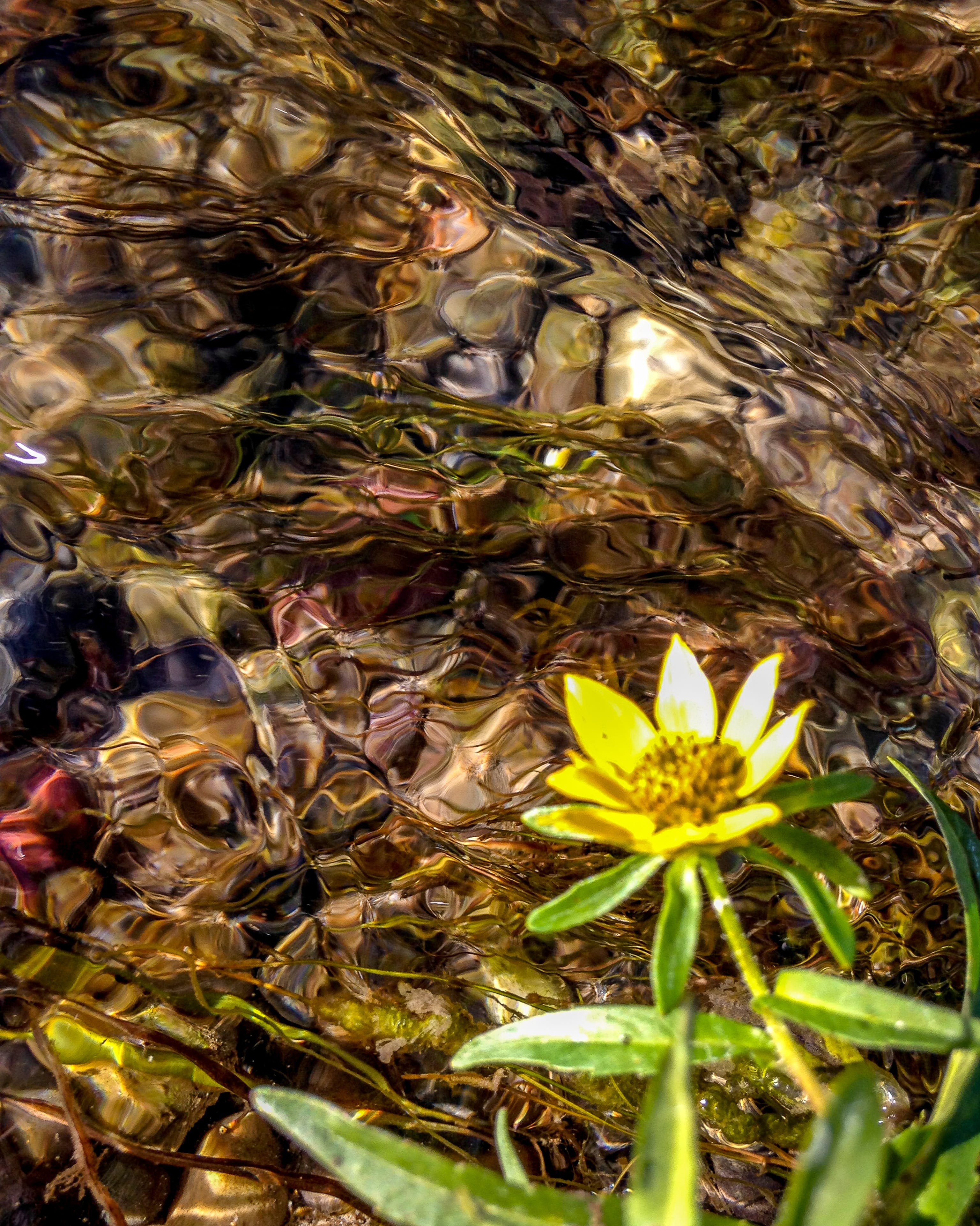 Free stock photo of flower, moving water, summer