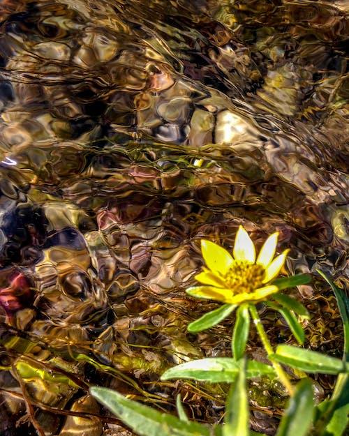 Δωρεάν στοκ φωτογραφιών με καλοκαίρι, κινούμενο νερό, λουλούδι