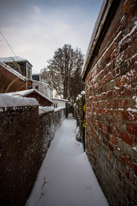 Free stock photo of brick, brick wall, cold, foot path