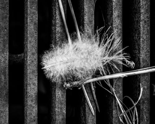 Free stock photo of abstract photo, black and white, feather, geometric shapes