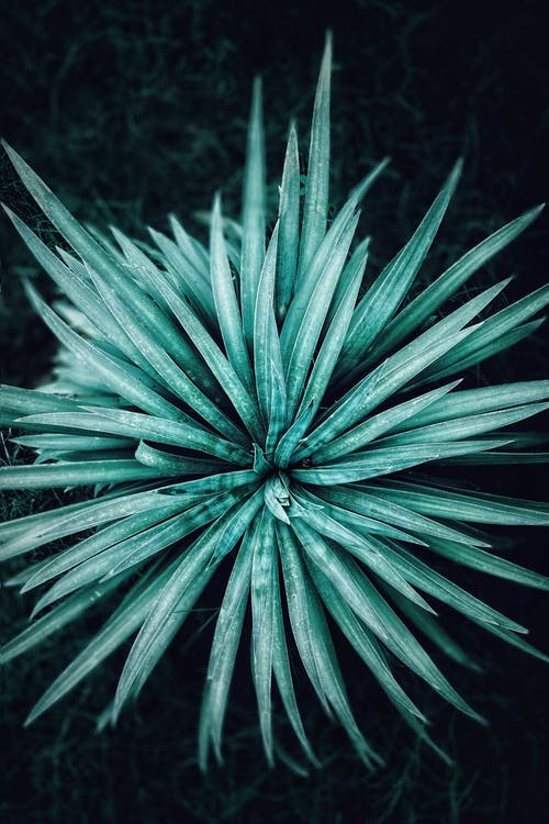Close-Up Shot of a Spiky Plant