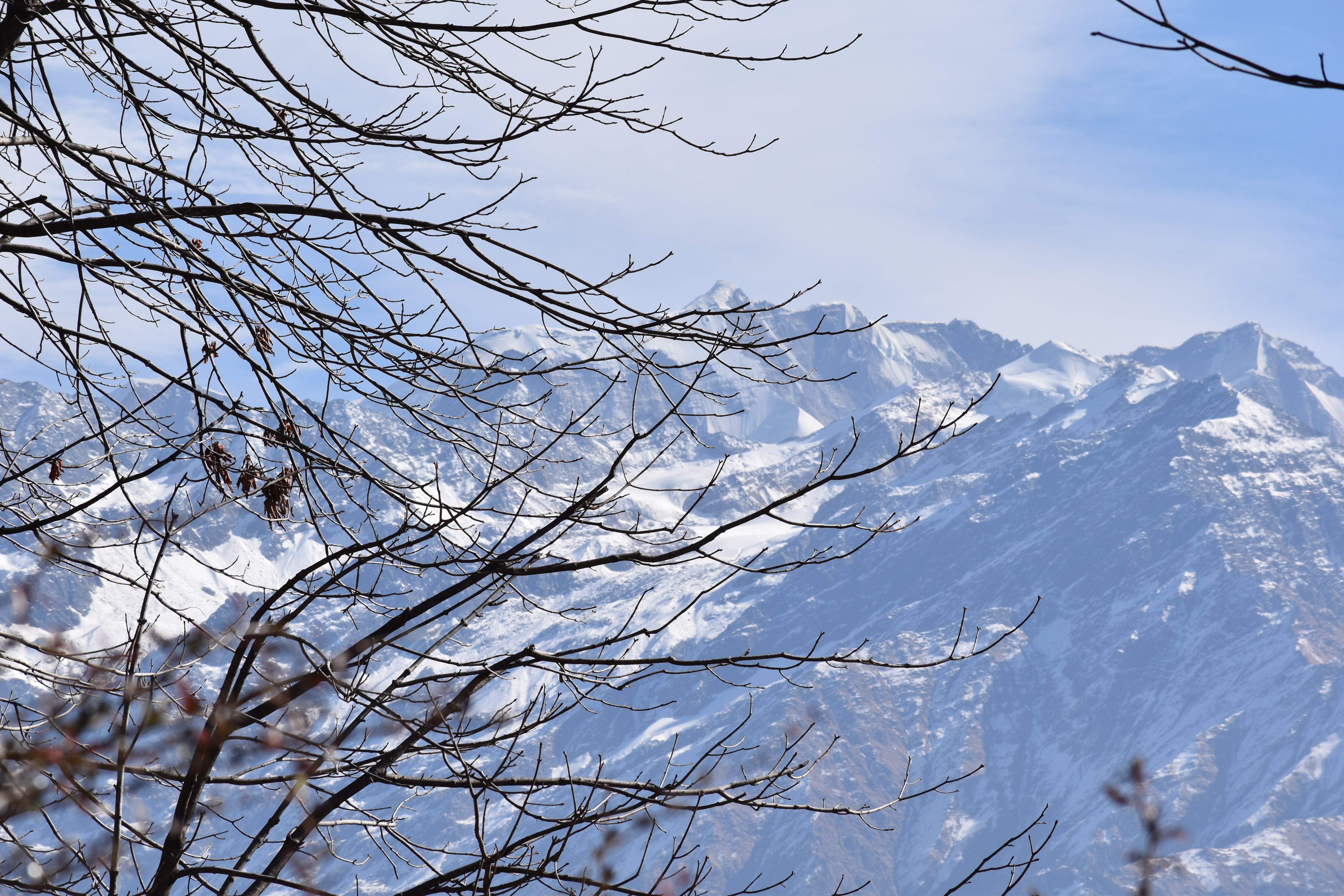 Bare Trees Near Mountain Covered With Snow
