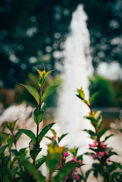 Kostnadsfri bild av blad, blomma, blommig