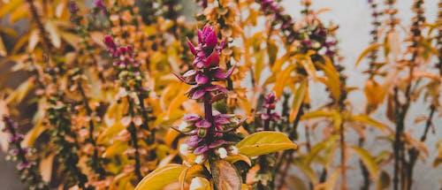 Ingyenes stockfotó botanikus, élénk színek, fényes, kert témában