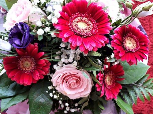 Photos gratuites de bouquet de fleurs