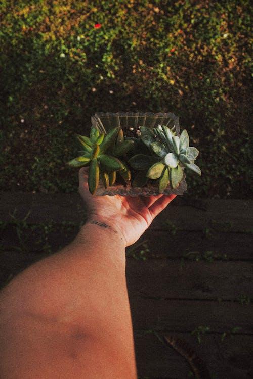 Foto stok gratis botani, di luar rumah, memegang