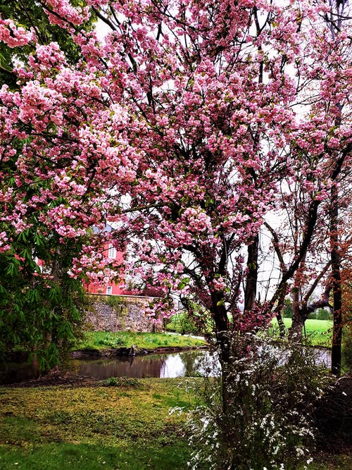 Photos gratuites de printemps