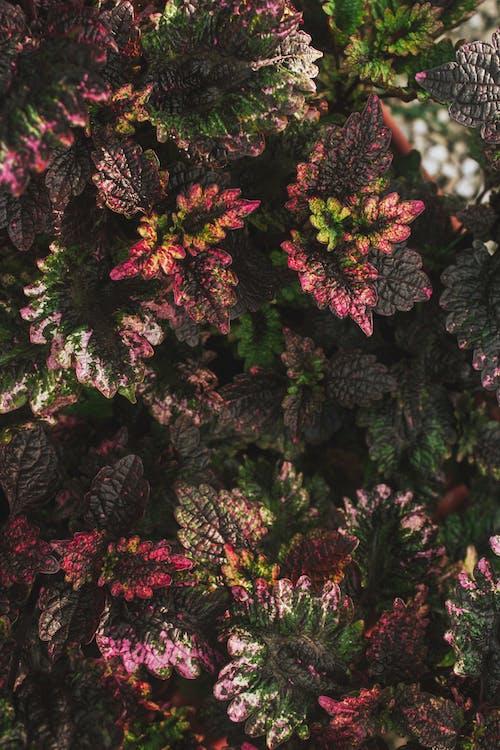 Imagine de stoc gratuită din anotimp, arbore, arbori veșnic verzi