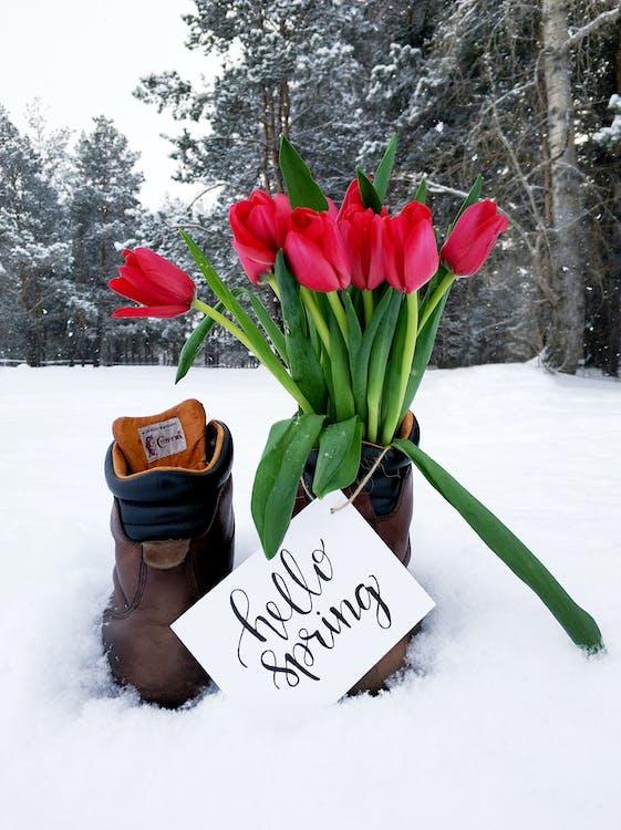Bouquet De Fleurs Rouges Sur Des Bottes En Cuir Marron Par Temps De Neige