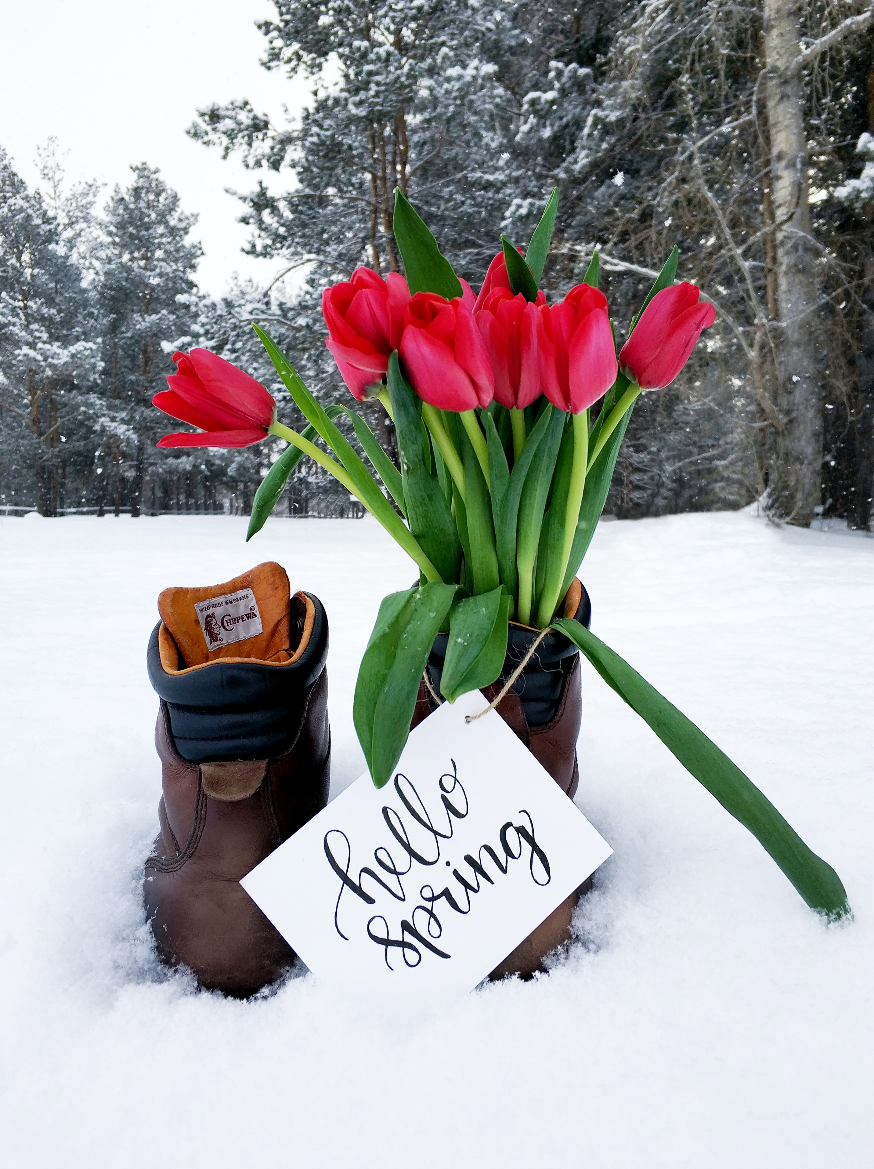 Red Flower Bouquet On Brown Leather Boots During Snow Weather Free