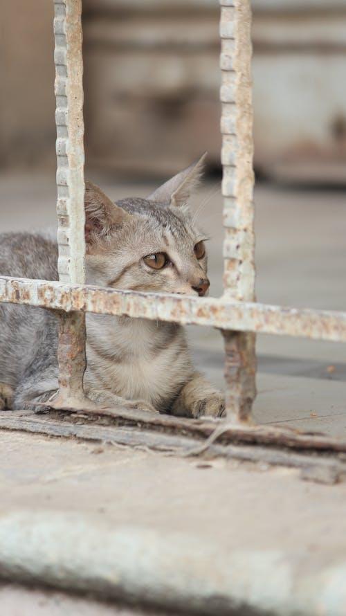 Free stock photo of animal, animal eye, cat