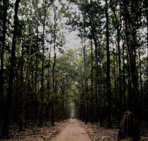 Foto d'estoc gratuïta de arbres, bosc, boscos, camí de carro