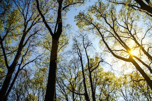 分支機構, 天性, 太陽, 晴天 的 免费素材照片