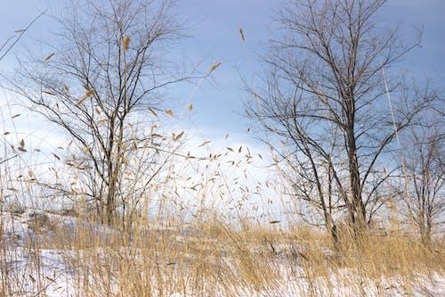 Безкоштовне стокове фото на тему «білий, вода, день, дерева»