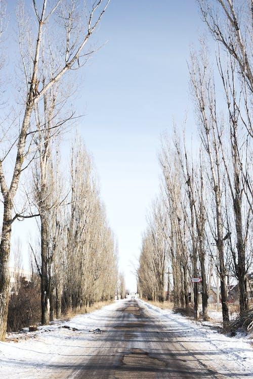 Безкоштовне стокове фото на тему «автомобіль, білий, Вулиця, день»