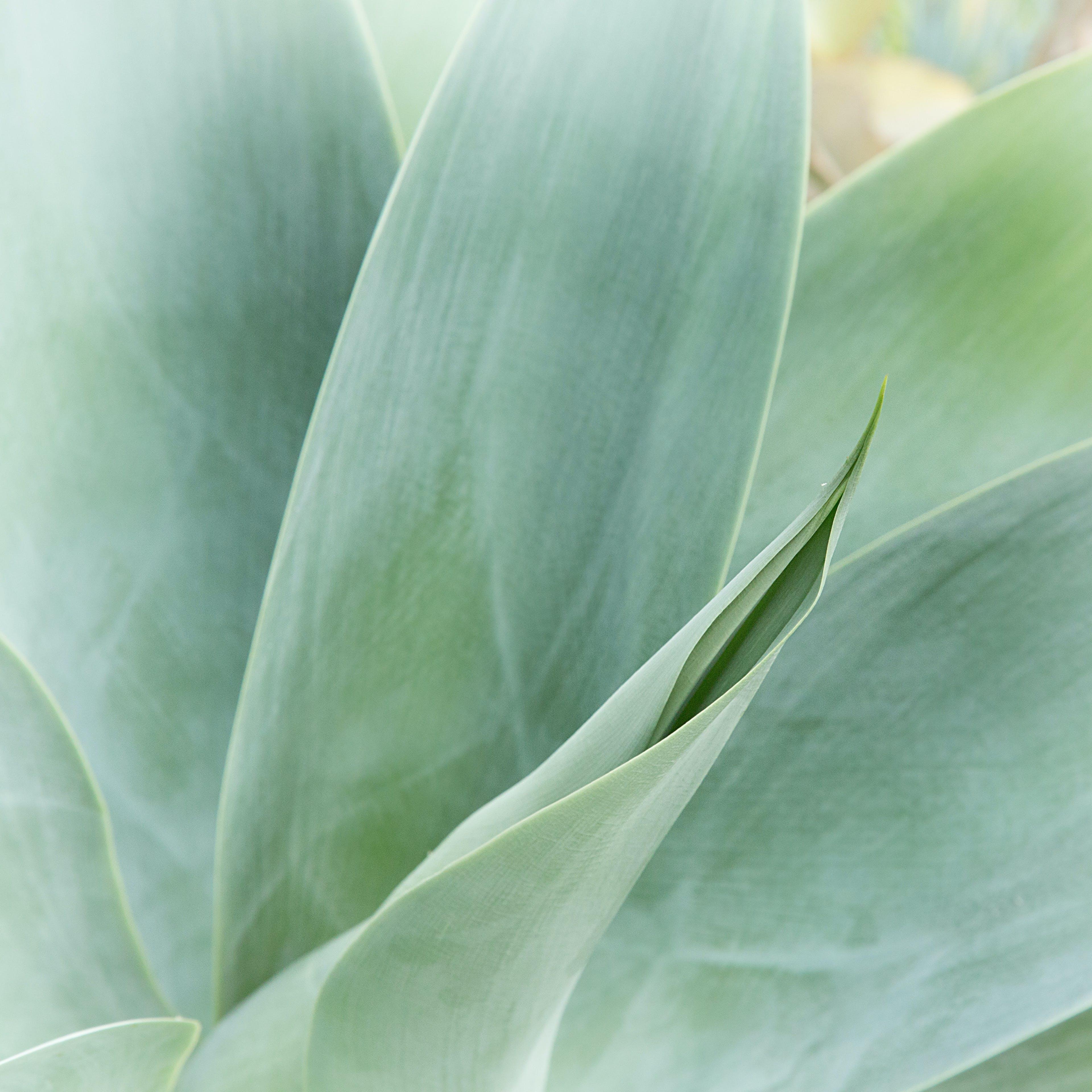 botanický, denní, jasný