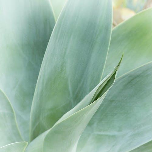 Бесплатное стоковое фото с дневное время, завод, зеленый, листья
