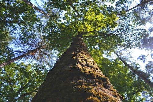 Ingyenes stockfotó alacsony szögű felvétel, erdő, fakéreg, kéreg témában