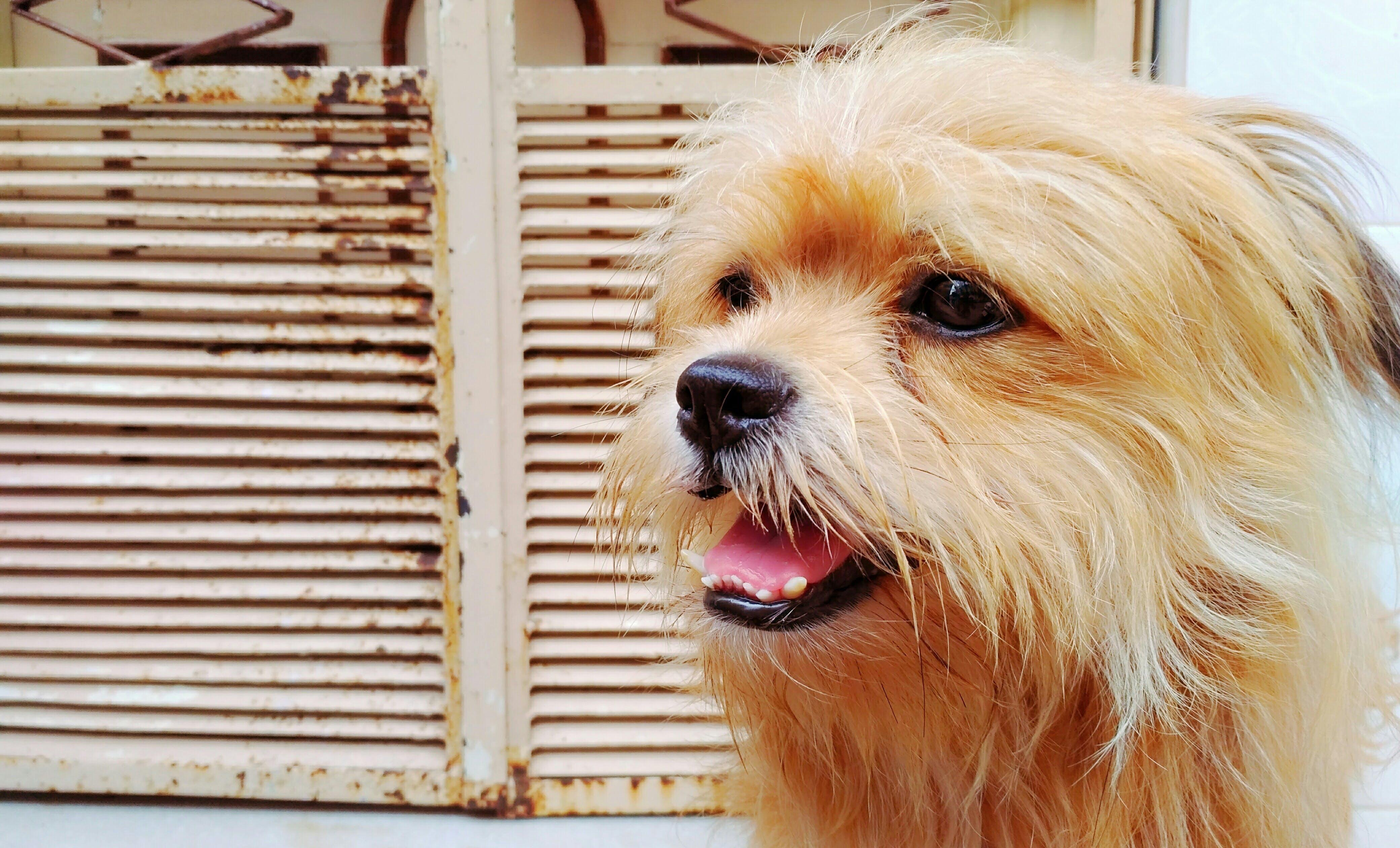 Základová fotografie zdarma na téma chlupatý, domácí mazlíček, malý, pes