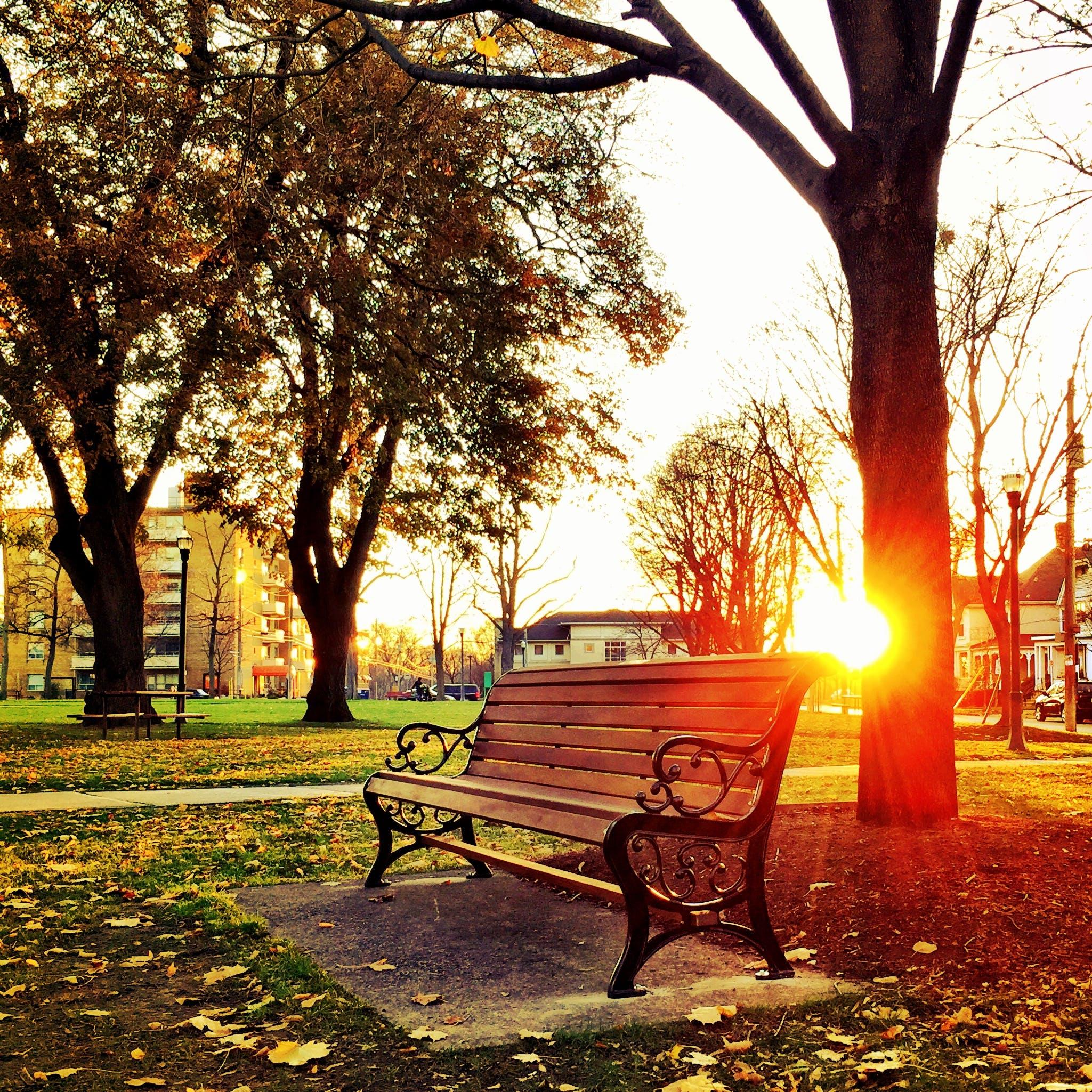 Brown Wooden Park Bench Under Green Leaf Tree during Sunset