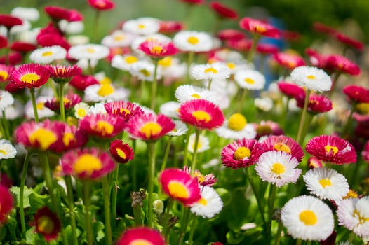 A Free Stock Photo Of Lawn With Colorful Flowers